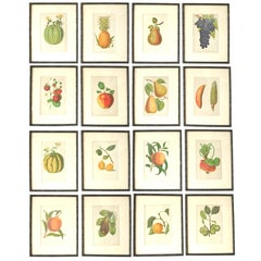 Set of 16 Antique Fruit Prints in Faux Bamboo Frames, 1850s