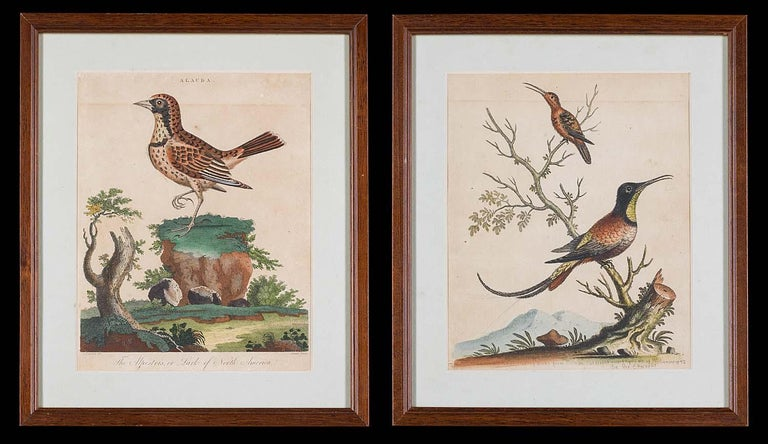 Set of 18th Century Engravings of Exotic Birds by George Edwards and Martinet For Sale 3