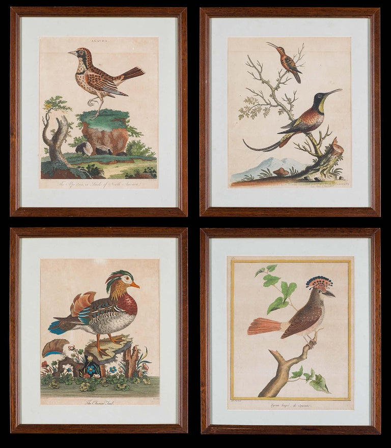 Set of 18th Century Engravings of Exotic Birds by George Edwards and Martinet For Sale 4