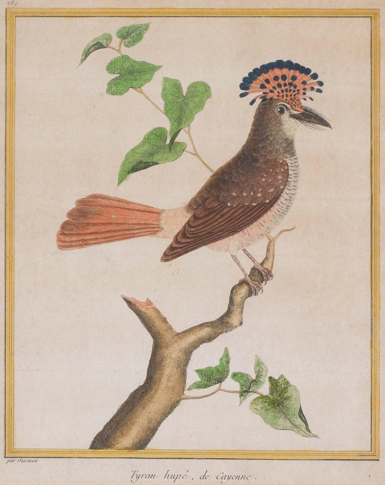 Engraved Set of 18th Century Engravings of Exotic Birds by George Edwards and Martinet For Sale