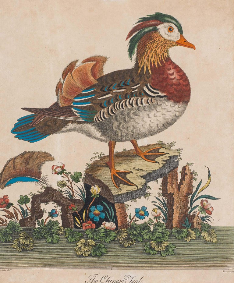 Set of 18th Century Engravings of Exotic Birds by George Edwards and Martinet In Good Condition For Sale In London, GB