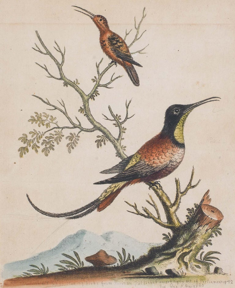 Paper Set of 18th Century Engravings of Exotic Birds by George Edwards and Martinet For Sale