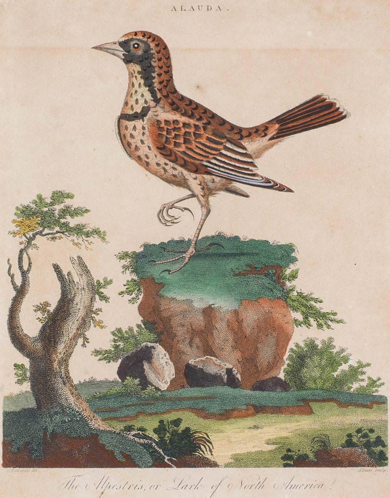 Set of 18th Century Engravings of Exotic Birds by George Edwards and Martinet For Sale 1