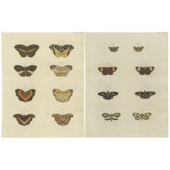 Set of 2 Antique Butterfly Prints 'Pl. 138' by Cramer, '1779'