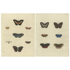Set of 2 Antique Butterfly Prints 'Pl. 143' by Cramer, '1779'