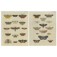 Set of 2 Antique Butterfly Prints 'pl. 397' by Cramer, 1779