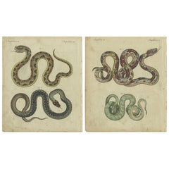 Set of 2 Antique Prints of Various Snakes by Bertuch, circa 1800