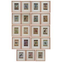 Set of 21 Framed Vintage Persian Painted Birds on Paper