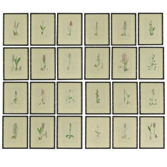 Set of 24 Antique Botanical Prints ( Orchids ) in Ebonized Faux Bamboo Frames