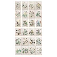 Set of 24 Original Antique Prints of Butterflies, circa 1880