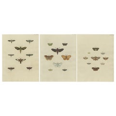 Set of 3 Antique Butterfly Prints 'Pl. 248' by Cramer, '1779'