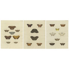 Set of 3 Antique Butterfly Prints 'Pl. 260' by Cramer, '1779'