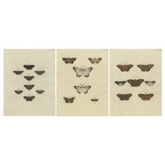 Set of 3 Antique Butterfly Prints 'pl. 354' by Cramer, 1779