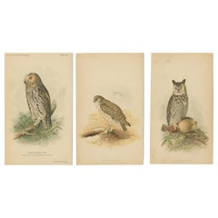 Set of 3 Antique Owl Prints Dwarf Screech Owl, Burrowing Owl, Great Horned Owl