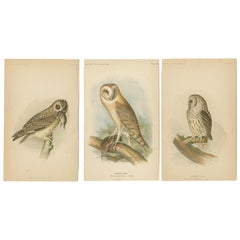 Set of 3 Antique Owl Prints Short-Eared Owl - Barn Owl - Barred Owl (1893)