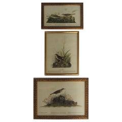 Set of 3 Bird Prints Framed in Gold Frames