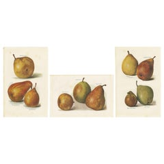 Set of 3 Vintage Fruit Prints of Pear Varieties by J. & H. Wright, '1924'