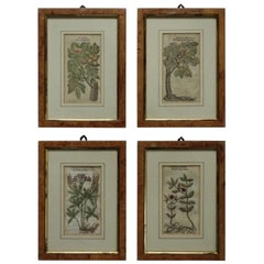 Set of 4 Antique English Botanical Prints