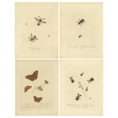 Set of 4 Antique Entomology Prints of Various Insects by Donovan, '1842'