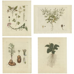 Set of 4 Antique Prints of Various Plants by Jacquin, 'c.1790'