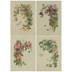 Set of 4 Antique Prints of Various Plants, Flowers and Insects by Lemercier