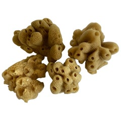 Set of 4 Assorted Natural Sea Sponges
