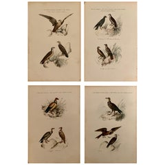 Set Of 4 European Hand Colored Prints Of Birds From 1830