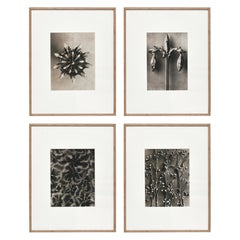 Set of 4 Karl Blossfeldt Black White Flower Photogravure Botanic Photography