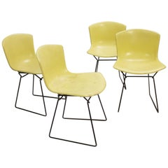 Set of 4 Molded Shell Side Chairs by Harry Bertoia, Fiberglass, Knoll Edition