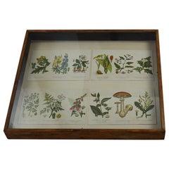 Set of 4 Original Antique Botanical Prints in a Shadow Box