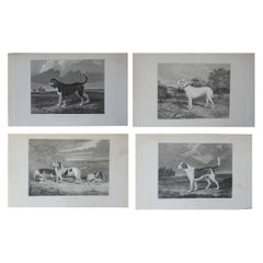 Set of 4 Original Antique Prints of English Sporting Dogs, 1831