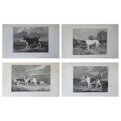 Set of 4 Original Antique Prints of English Sporting Dogs, 1831