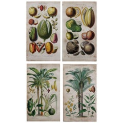 Set of 4 Original Antique Prints of Fruit and Palm Trees After Walter Hood Fitch