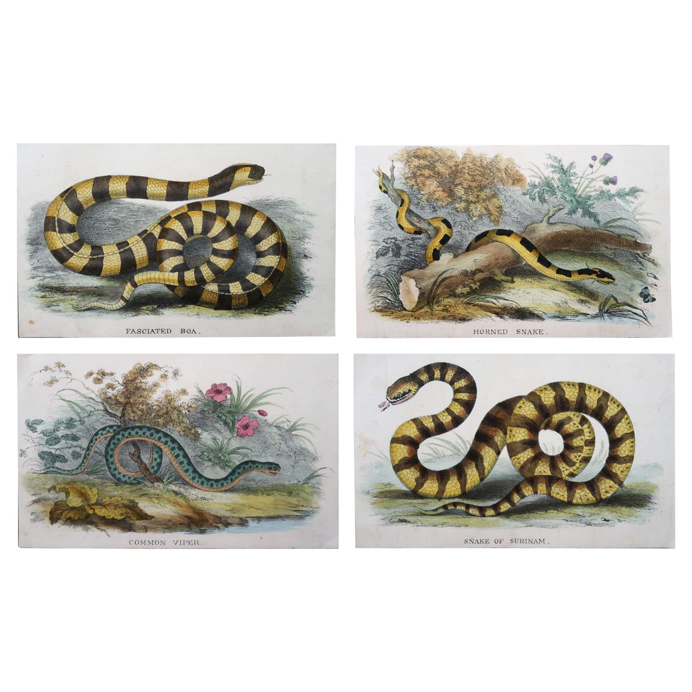 Set of 4 Original Antique Prints of Snakes, circa 1860