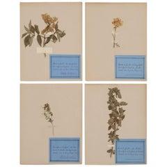 Set of 4 Vintage French Pressed Botanical's