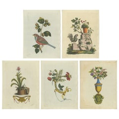 Set of 5 Antique Prints of Various Animals and Ornaments by Haas 'c.1800'