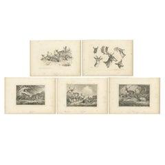 Set of 5 Antique Prints of various Deer by Howitt 'c.1820'
