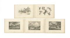 Set of 5 Antique Prints of various Deer by Howitt (c.1820)