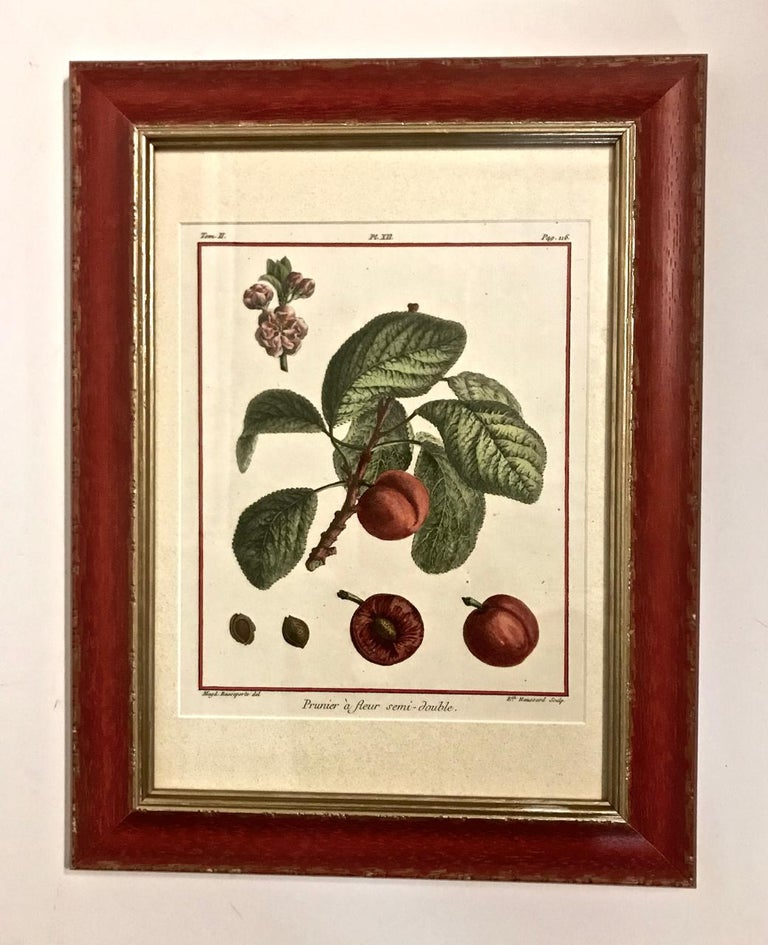French Set of 5 Hand-Colored Engravings by Duhamel de Monceau, 1768 For Sale