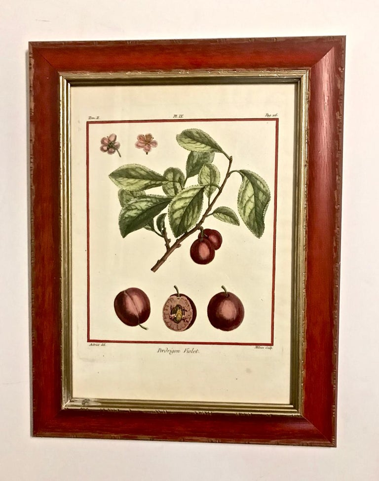 Set of 5 Hand-Colored Engravings by Duhamel de Monceau, 1768 In Good Condition For Sale In Pasadena, CA