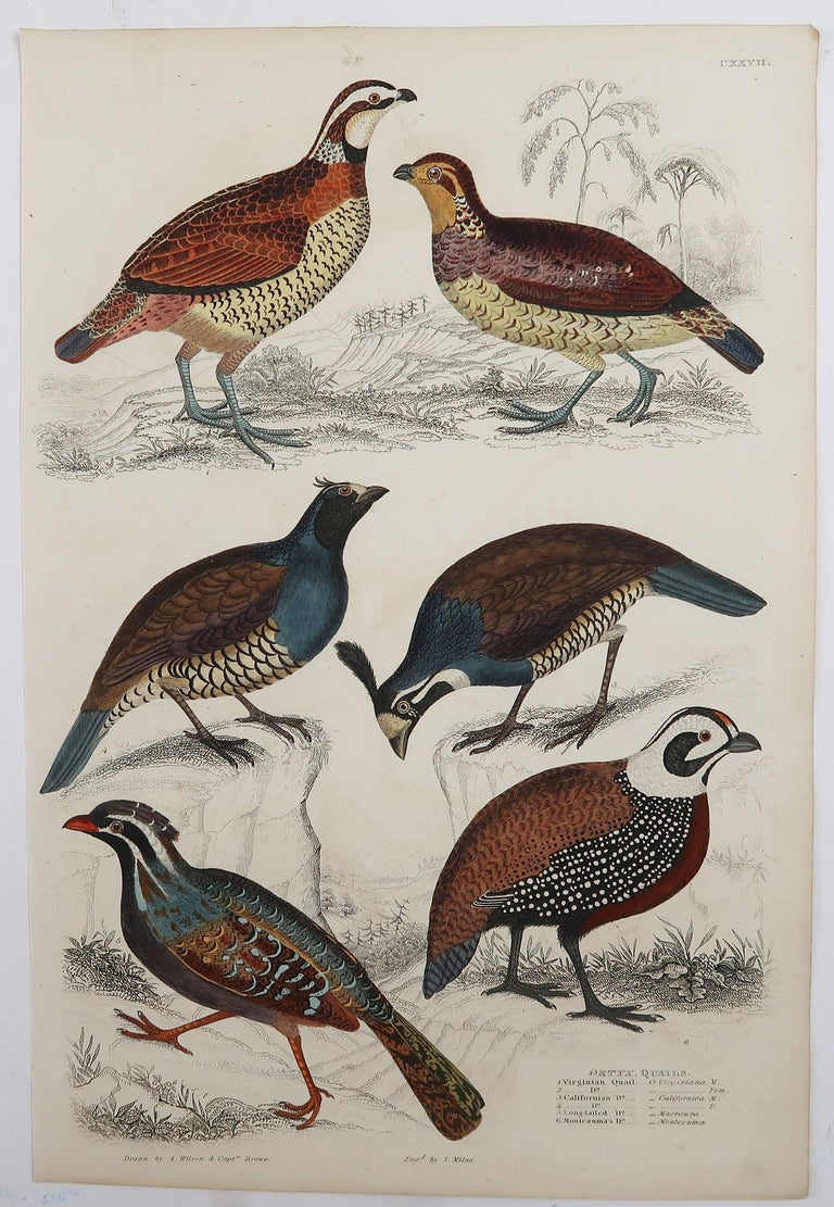 Folk Art Set of 5 Original Antique Prints of Game Birds, 1830s For Sale