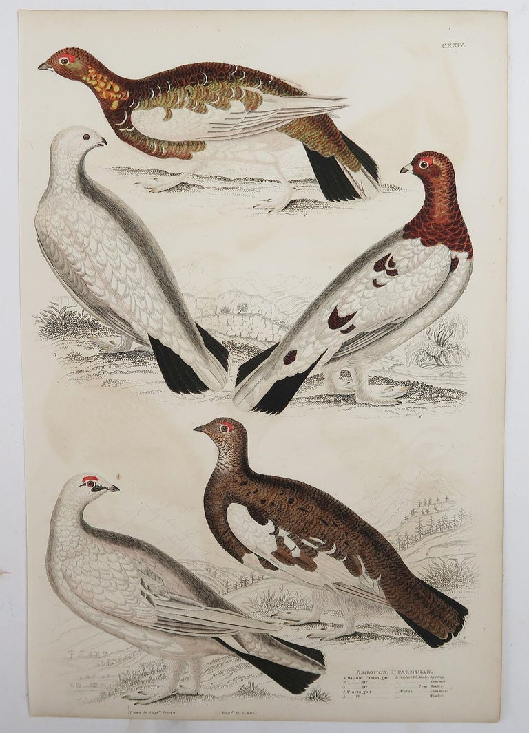 English Set of 5 Original Antique Prints of Game Birds, 1830s For Sale