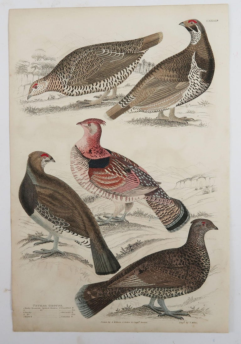 Set of 5 Original Antique Prints of Game Birds, 1830s In Good Condition For Sale In St Annes, Lancashire