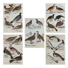 Set of 5 Original Antique Prints of Game Birds, 1830s
