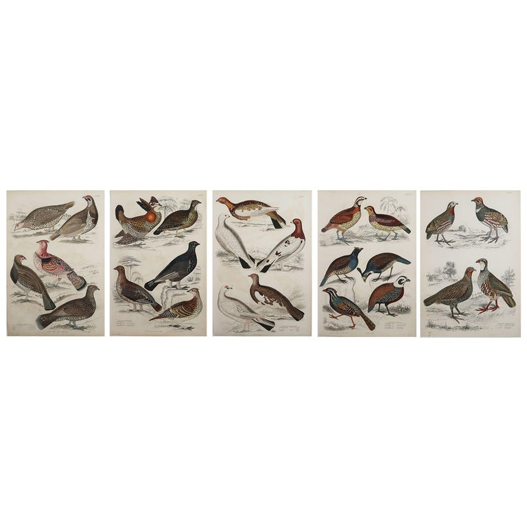 Set of 5 Original Antique Prints of Game Birds, 1830s For Sale