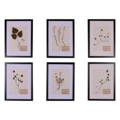 Set of 6 1940s Dutch Herbarium or Botanicals