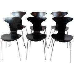 Set of 6 Black Munkegaard Designed by Arne Jacobsen in 1955