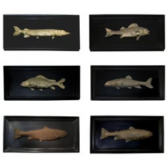 Set of 6 Early 20th Century Bronze Freshwater Fish Mounted on a Black Frame