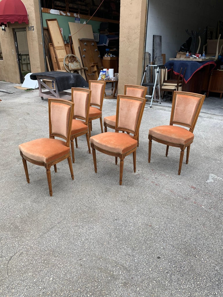 Velvet Set of 6 French Louis Xvl Solid Mahogany Dining Chairs, 1910s For Sale