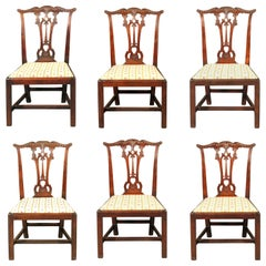 Set of 6 George III Period Chairs after a Design by Thomas Chippendale